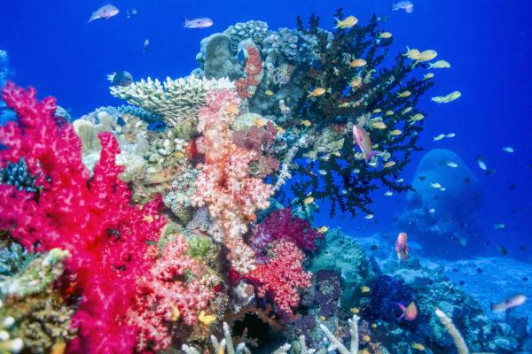 Fiji islands charters